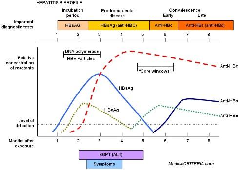 Hbv virus epatite b - Epatite c periodo finestra ...